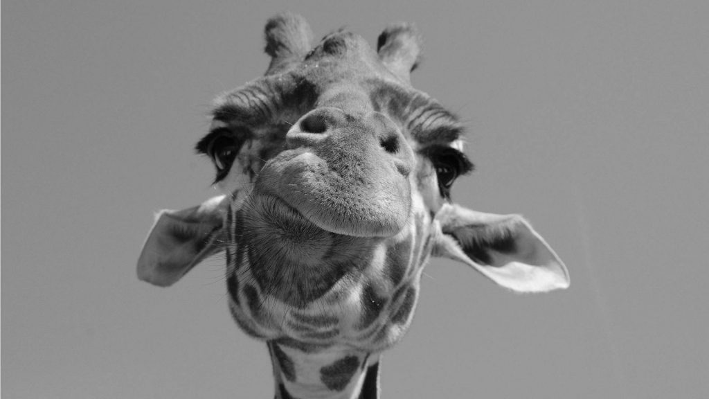alice-le-guiffant-communication-non-violente-Girafe-sourirante