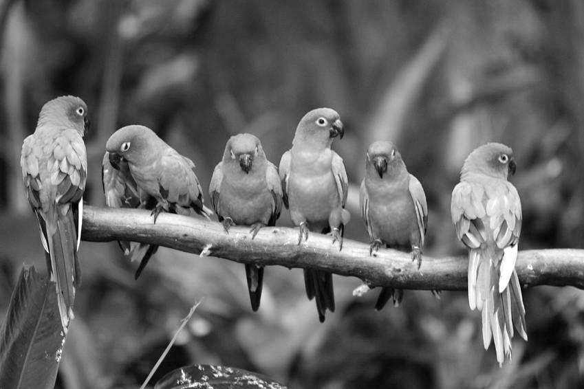 alice-le-guiffant-cercle-de-parole-oiseaux