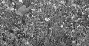 alice-le-guiffant-que-vaut-ma-vie-fleurs-sauvages NB