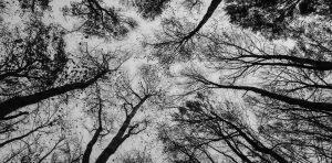 alice-le-guiffant-connexion-arbres