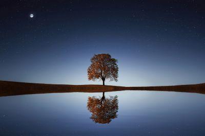alice-le-guiffant-exercice-de-gratitude-ce-qu-il-est-encore-possible-de-faire-arbre