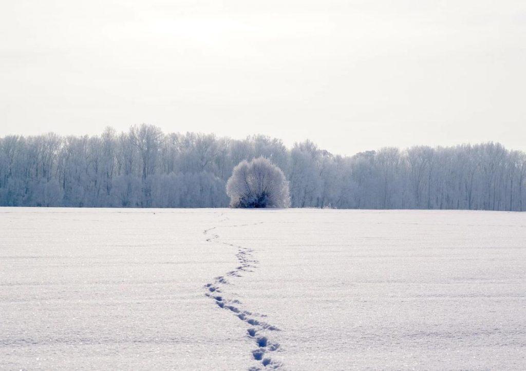 alice-le-guiffant-stage-reconnexions-traversée-pas-neige