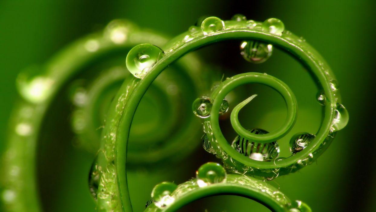 alice-le-guiffant-travail-qui-relie-spirale-plante