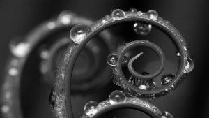 alice-le-guiffant-travail-qui-relie-spirale-plante.noir-et-blanc