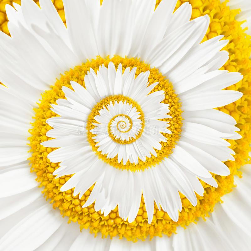 alice-le-guiffant-danser-la-relation-spirale-fleur-couleur